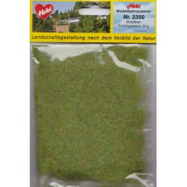 Polvere oliva NOCH