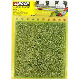 Manto erboso naturale campo di colza